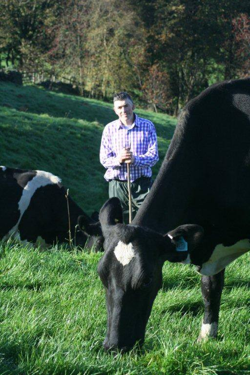Image of A2 cows at Blaze Farm