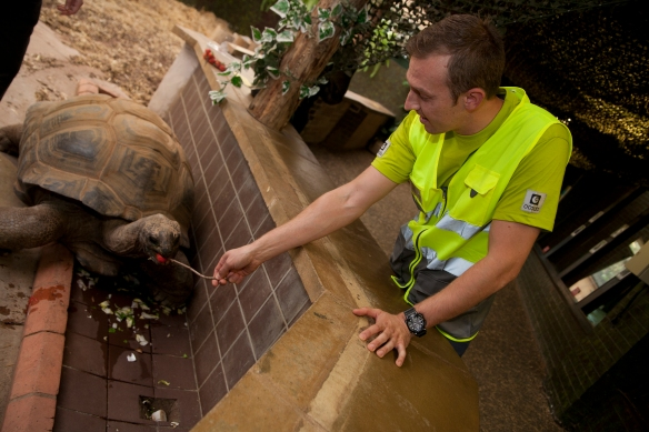 Image of an Ocado driver feeding a turtle