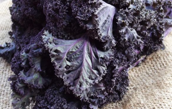 Image of Natoora purple kale